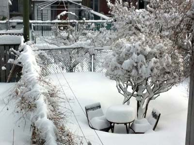 Spring snow in Montreal
